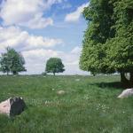 Riedulynas Suvalkų kraštovaizdžio parke